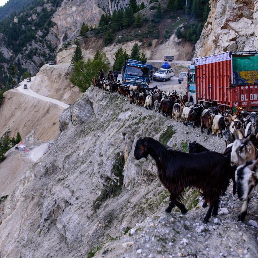 Goat arrive on the scene. @TVrugtman