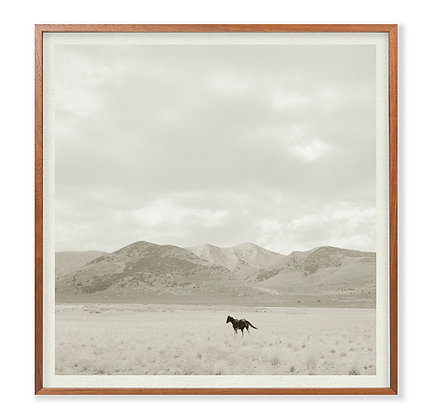 Landscape with Horse 2
