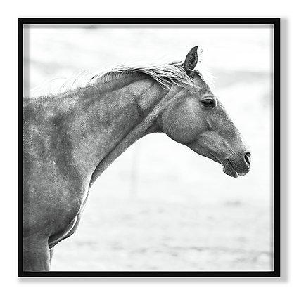 Horse FR BW