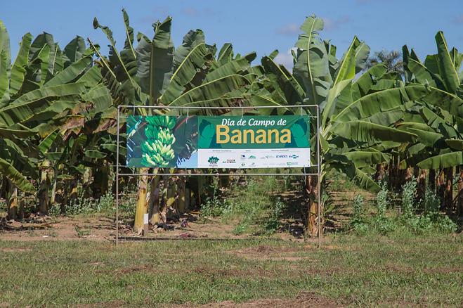 Dia-de-Campo-da-Banana.png