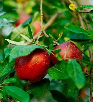 city_fruit-44.jpg