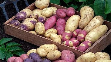 potato-selection940x627.jpg