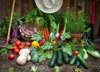 Vegetable-Growing-300x216.jpg