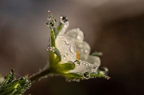 flowerswith dew.jpeg