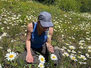 daisies.jpg