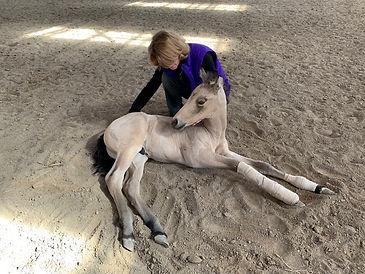horsecolt.JPG