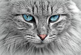 cat-1045782_1280 (1).jpg