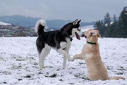dogpaws.jpg