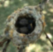 Humming Bird 2_edited.jpg