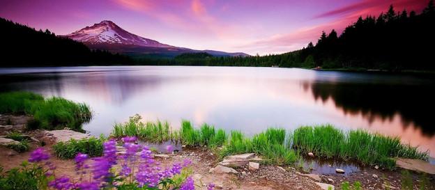 El Precioso Camino de la Quietud