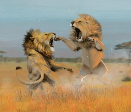 leões brigando.jpg