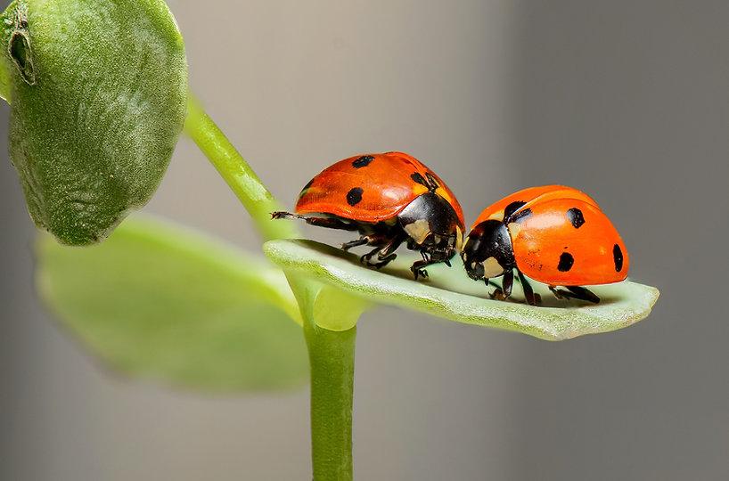 FREE relationshps ladybugs-1593406_1920.jpg