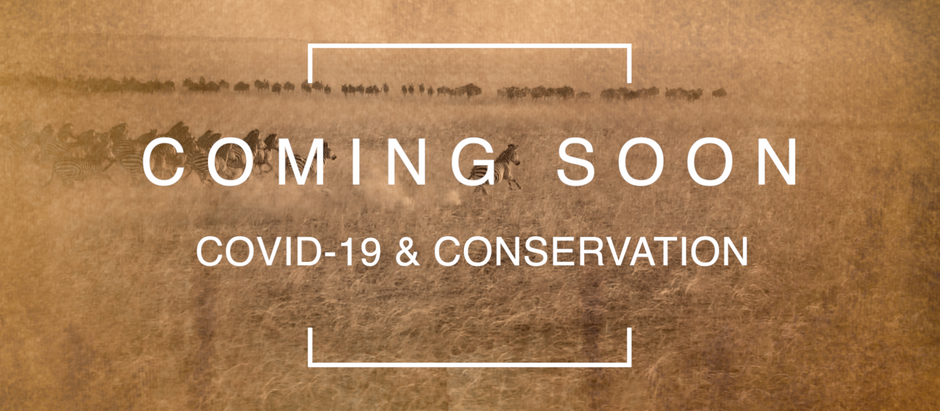 Series Coming Soon: COVID-19 & Conservation
