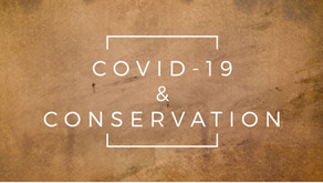 Series Summary   COVID-19 & Conservation