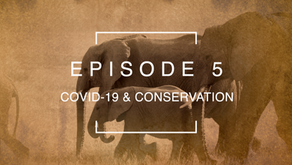 Episode 5: COVID-19 & Conservation with Rachael Cooper-Bohannon   Bats Without Borders, Malawi.