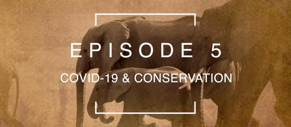 Episode 5: COVID-19 & Conservation with Rachael Cooper-Bohannon | Bats Without Borders, Malawi.
