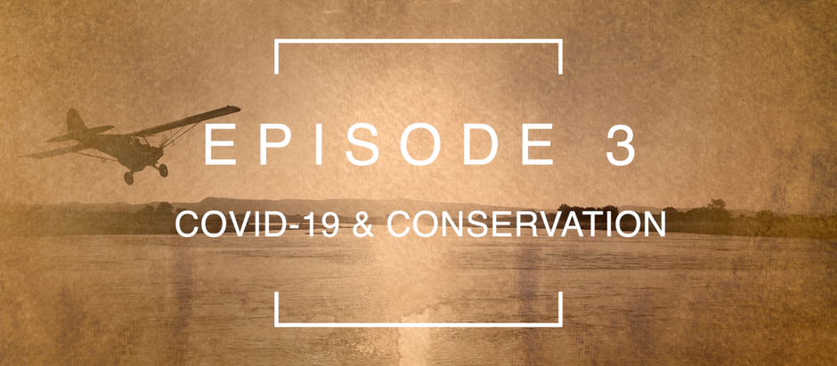 Episode 3: COVID-19 & Conservation with Reilly Travers | Imire Wildlife Conservancy, Zimbabwe.