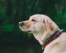 Montreal, Best Montréal, best dog trainer, dog trainer, Montreal dog trainer, dog trainer Montreal, Dog training, Montreal dog training, Best Dog Training, Dog training Montreal, Dog, Training, trainer, K9, Obedience, best dog trainers, dog trainers, Montreal dog trainers, dog trainers Montreal Best Dog Trainer & Dog Training Montreal | JR Dog Training | how can you train a dog, dog trainer, dog training, how to train your dog, crate training a dog, dog training schools, dog training schools montreal, dog school, dog obedience training, dog trainer classes, dog boarding, dog obedience trainer, at home dog trainers, doggy obedience school, puppy obedience training classes, dog obedience trainer montreal, Family Friendly Training, Private Dog Training, Behavior Training, Aggressive Dog Rehabilitation, Obedience Training, Protection Training
