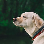 Poza pies