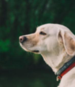 chien extérieur