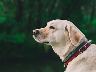 Hund Outside