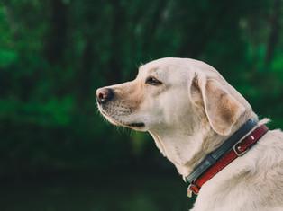 perro afuera