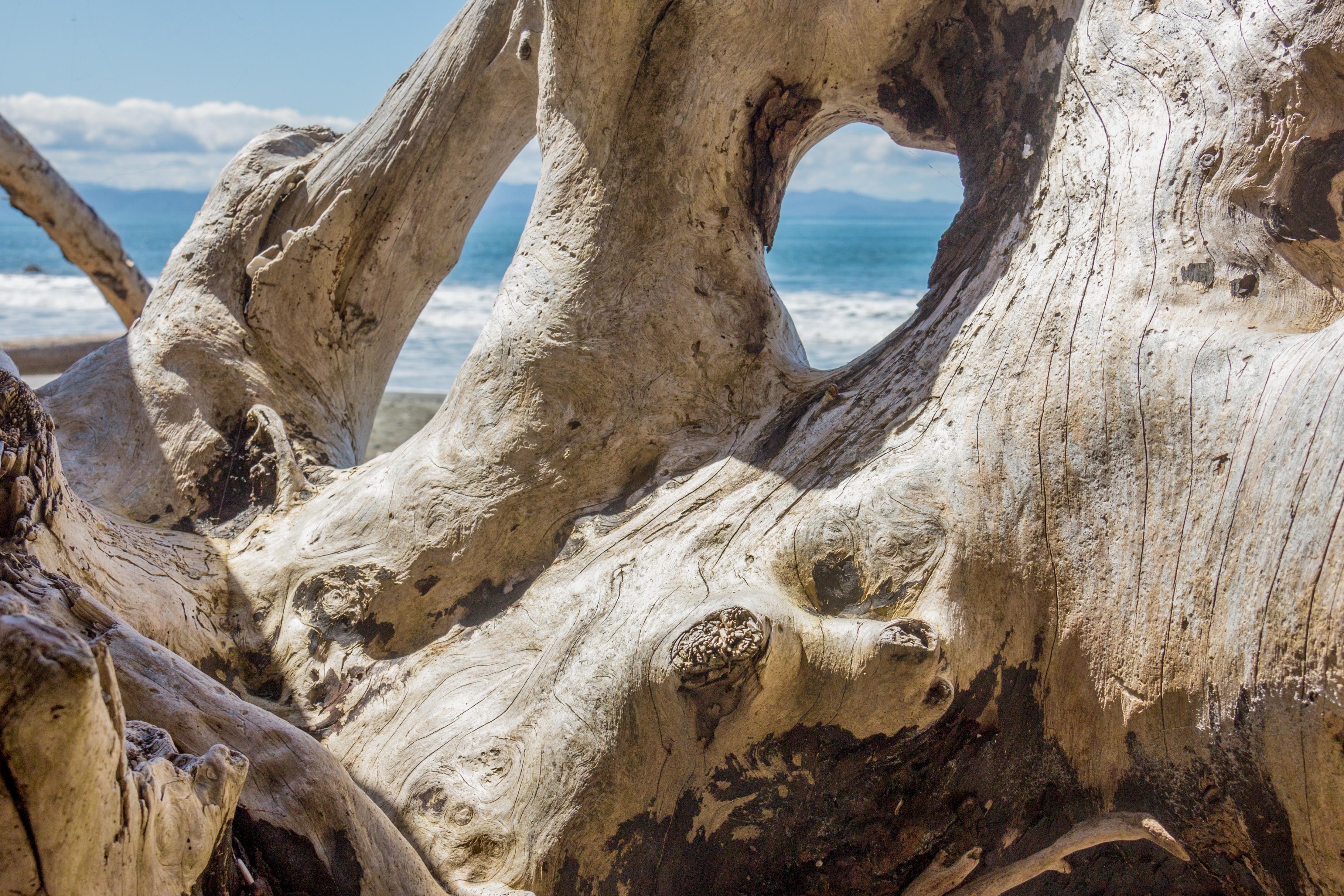 china beach driftwood