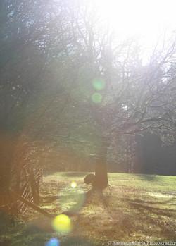 Tree in the sun farm 5 x 7