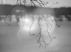 Light bubbles and branches.jpg