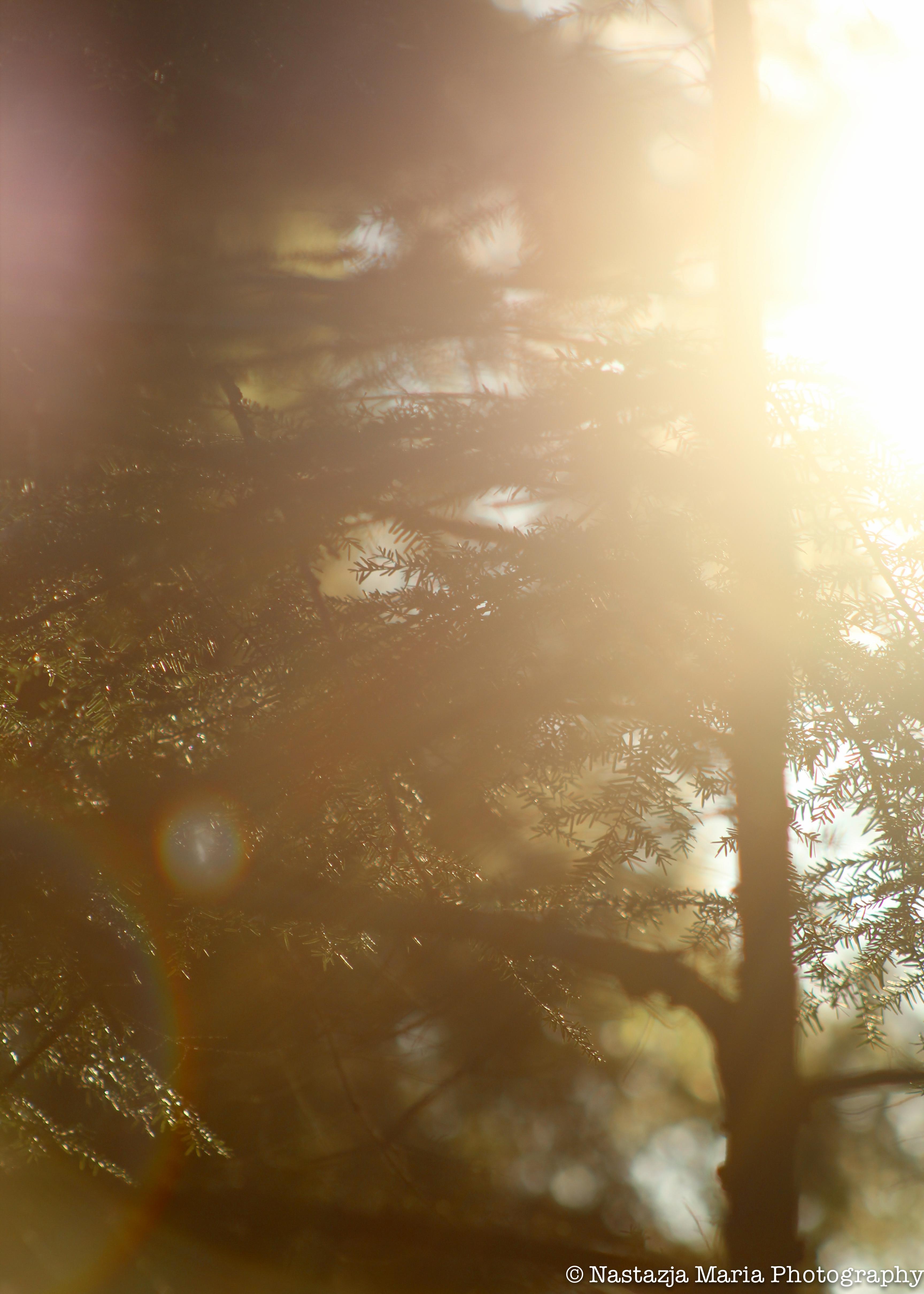 Tree in the sun 5 x 7