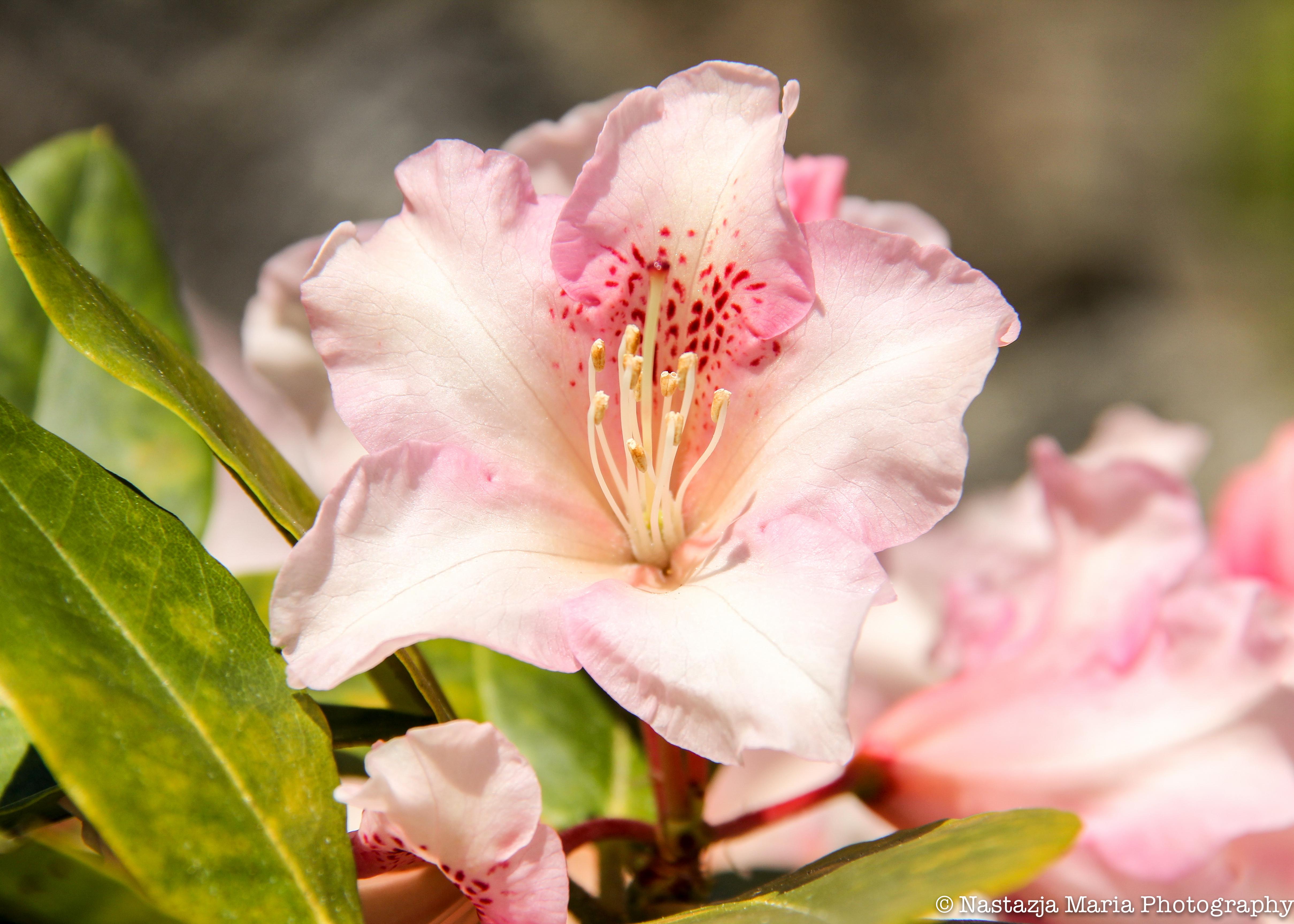 Flower 5 x 7 with watermark.jpg