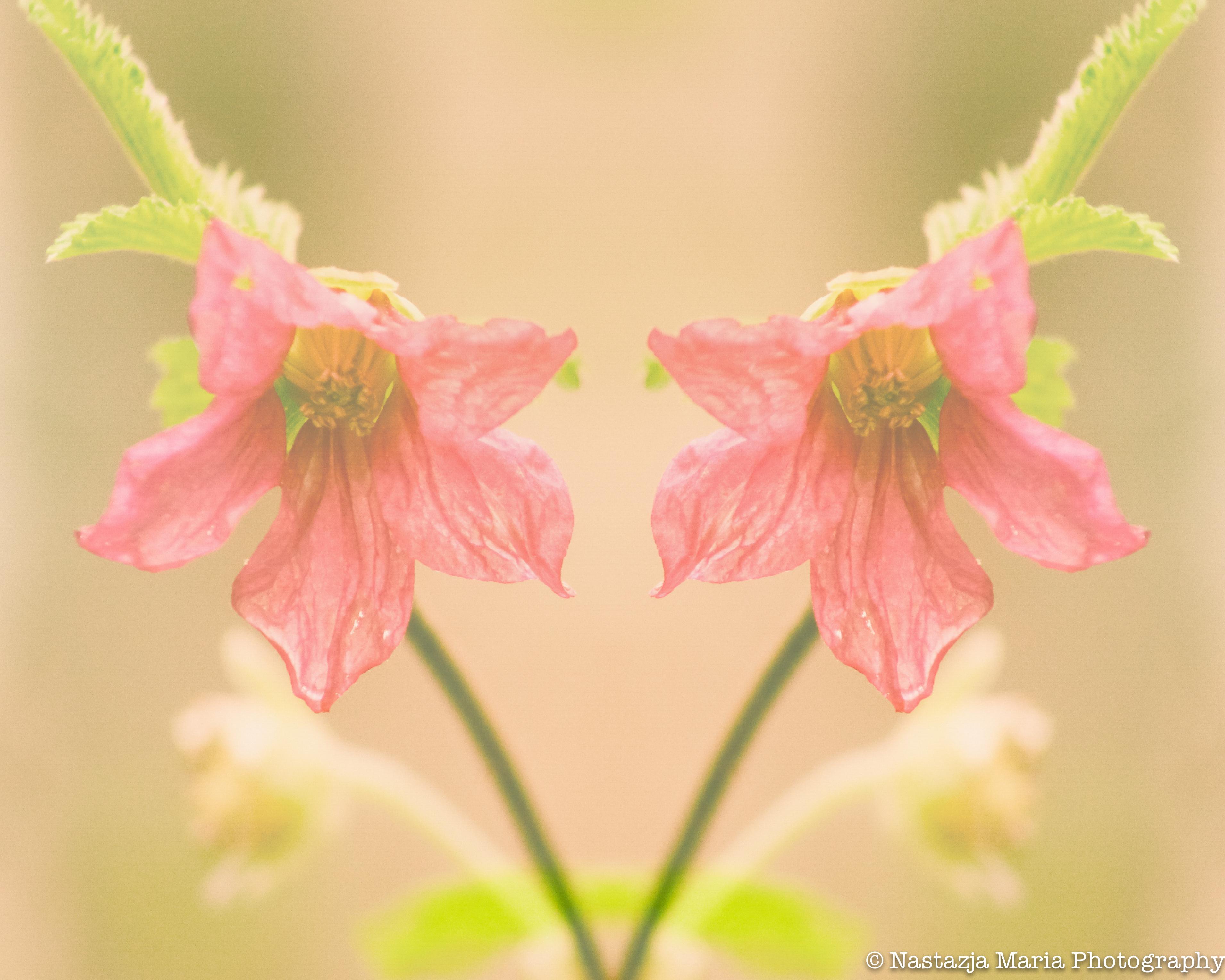 double flower mark 8 x 10