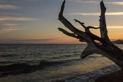 beached wood gordons beach