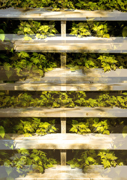 Lays of stairs and ivy from flowerpot trail.jpg