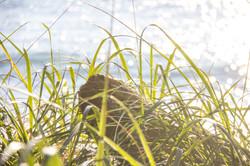 beach grass french beach