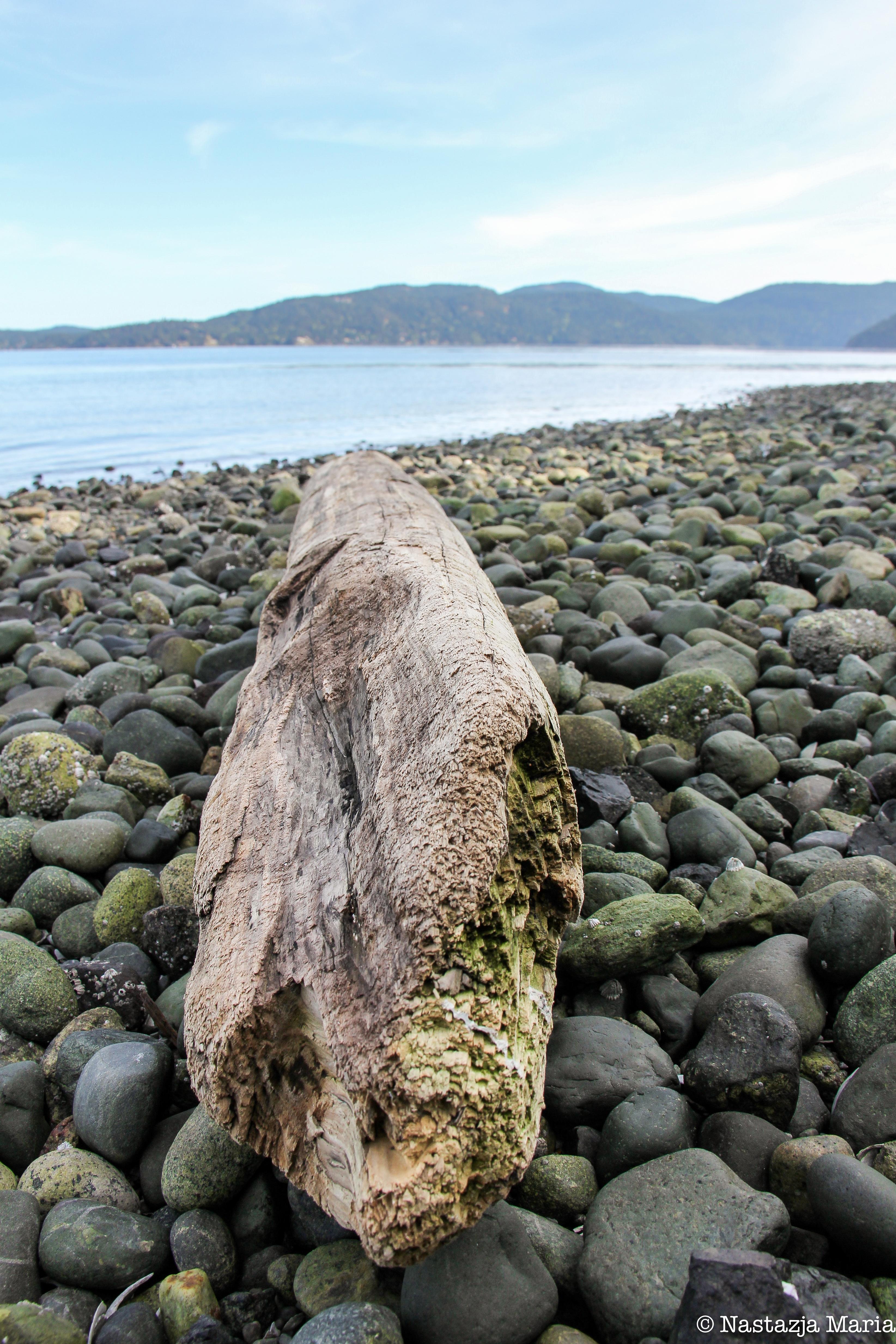Log at Bamberton Beach.jpg