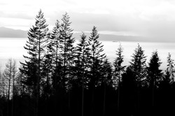 tree, ocean and mountain silhoutte