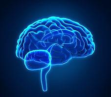 human brain blue.jpg