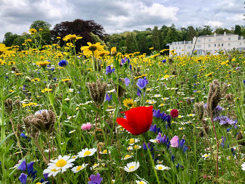 Coworth Park - Wild Flower Meadow