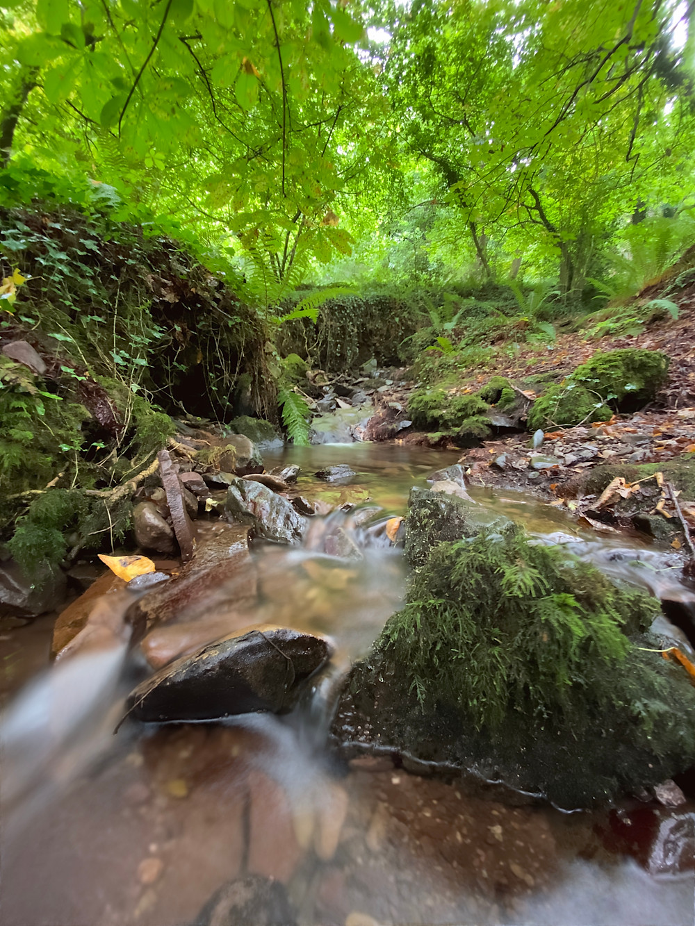 Water flowing through stream in Somerset