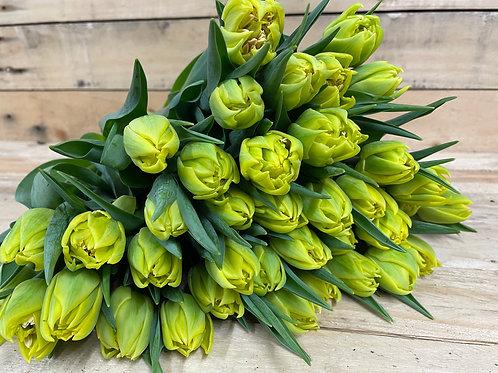 30 Beautiful Dutch Tulips by post