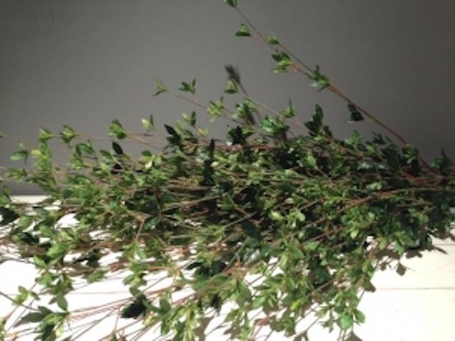 Artificial Foliage