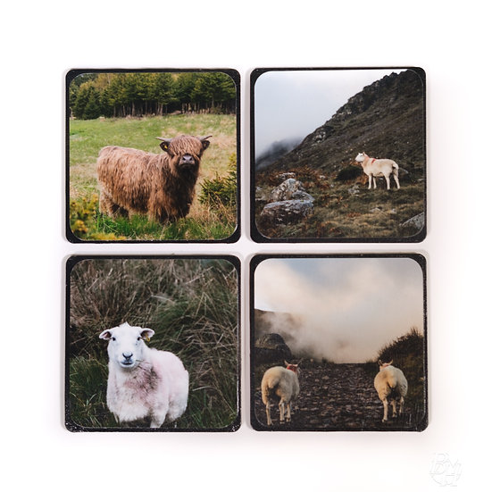 Coaster Set - Animals