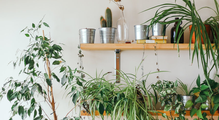 Healthy plants fill 2 bookshelves in a therapy office located in Boulder, Colorado that treats anxiety, self-esteem, grief and loss, and trauma