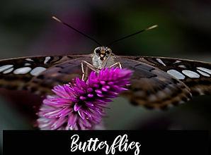 2020_butterflies.jpg
