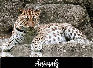 2020_animals.jpg