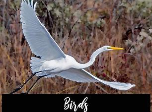 2020_birds.jpg
