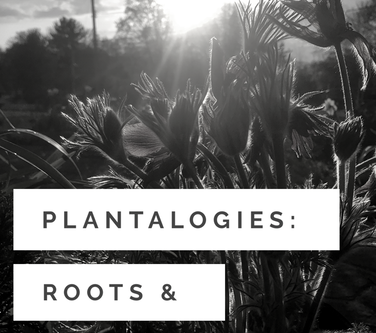 Plantologies: Roots & Self Awareness