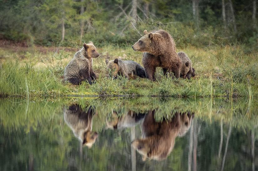 COLOUR - Mother Love by Pamela Wilson (12 marks)