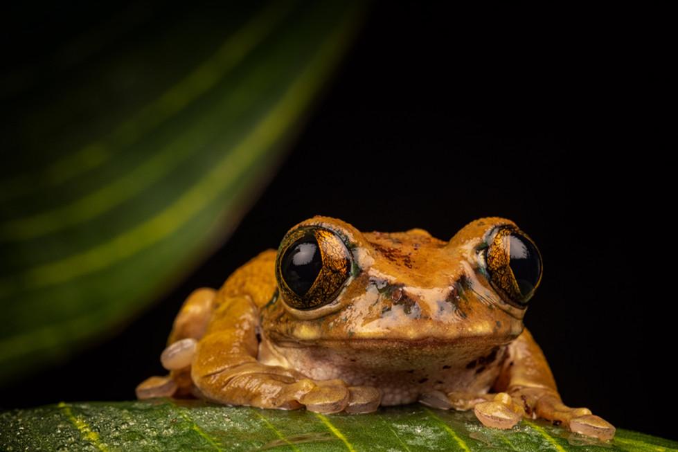 COLOUR - Tree Frog by Iris Rainey  (10 marks)